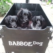 Babboe Dog bakfiets (3)
